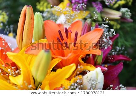 narancs · virágok · közelkép · virág · víz · citromsárga - stock fotó © marylooo