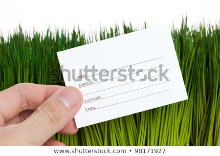 Címkönyv zöld fű közelkép Stock fotó © devon