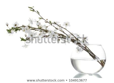 Stock fotó: Gyümölcsfa · ág · váza · piros · virágok · fából · készült · virág