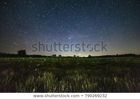 Notte panorama luce splendente rami Foto d'archivio © Aliftin