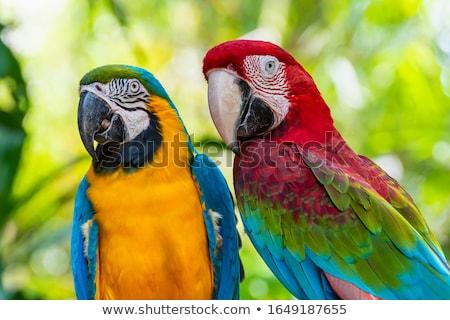 Kleurrijk vergadering boom vogel groene Blauw Stockfoto © Witthaya