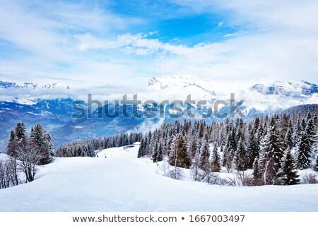 Snow-covered pine trees on the mountain. Stock photo © Leonardi