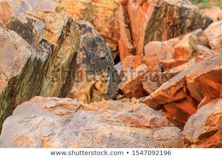 Kaya duvar doku doğa arka plan çöl Stok fotoğraf © iTobi