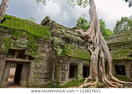 Gigante árvore pedras templo Angkor Wat floresta Foto stock © RuslanOmega