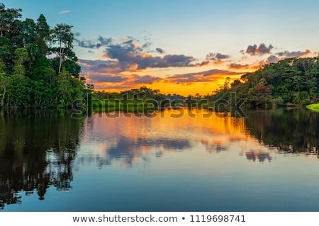 Orange Tree in Ecuador Stock photo © rhamm