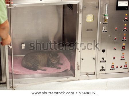 vet technician opens door to oxygen cage Stock photo © aspenrock