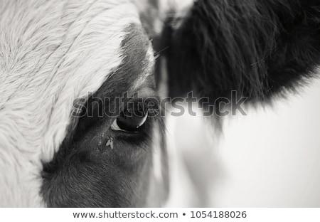 barna · tehén · fa · baba · fű · mező - stock fotó © vadimmmus