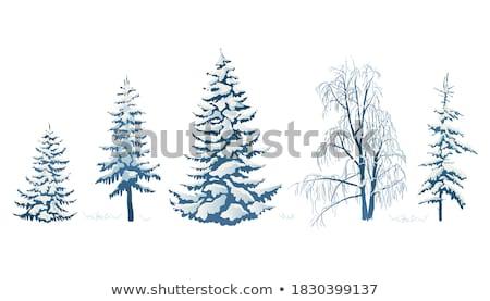 Alberi foresta neve inverno blu bianco Foto d'archivio © Leonardi