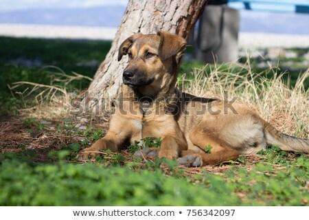 hond · leggen · trottoir · straat · triest · daklozen - stockfoto © yanukit