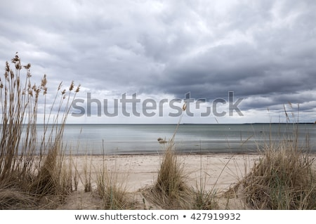 Strand bewolkt dag hemel vol grijs Stockfoto © tanya_ivanchuk