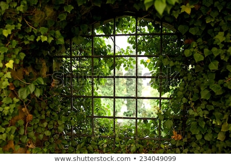 red and green ivy surround windows on castle stock photo © backyardproductions