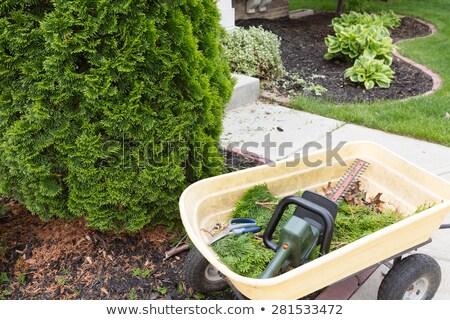 elektrik · el · adam · çalışmak · yeşil · bitki - stok fotoğraf © ozgur