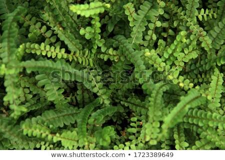 Weelderig groene vis bot varen mooie Stockfoto © pzaxe