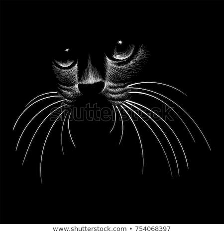 Velho gato preto branco preto Foto stock © cynoclub