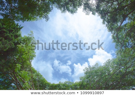 High deciduous trees in deciduous forest  Stock photo © meinzahn