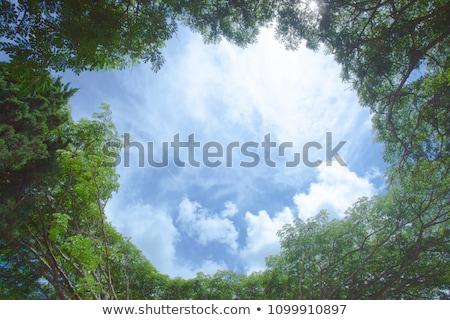 落葉性の · 木 · 葉のない · ツリー · 白 - ストックフォト © meinzahn
