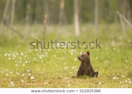 Aranyos kicsi barnamedve medvebocs plüssmaci áll Stock fotó © adrian_n