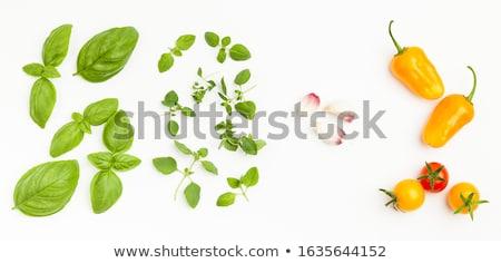 Friss oregano levél fekete étel zöld Stock fotó © Digifoodstock