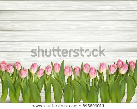 白 · 赤 · 黄色 · チューリップ · 花 · 孤立した - ストックフォト © beholdereye