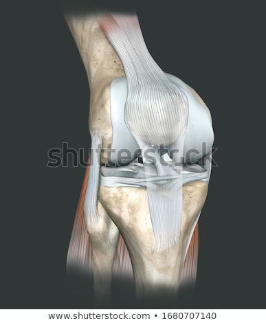 Human knee joint stock photo © Andrei_
