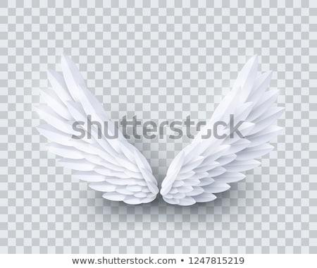 Set of white wings Stock photo © blackmoon979