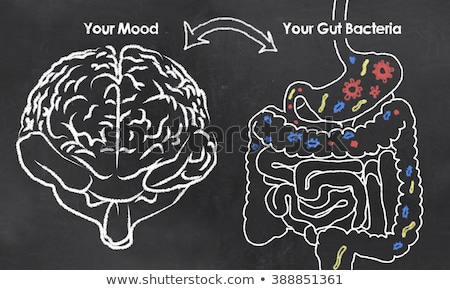 Stock photo: Stomach Brain