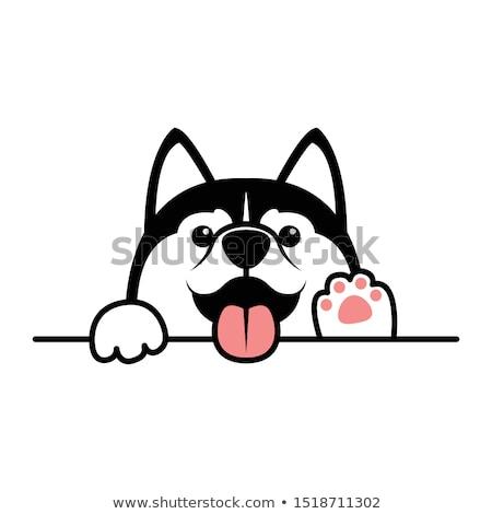 Husky hondenras mooie home ogen zwarte Stockfoto © racoolstudio