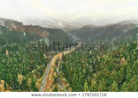 felső · kilátás · út · erdő · nyár · délután - stock fotó © vlad_star