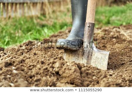 Kert ásó izolált fehér zöld ipar Stock fotó © kitch