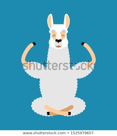 cartoon · alpaca · oggetti · isolati · può - foto d'archivio © popaukropa