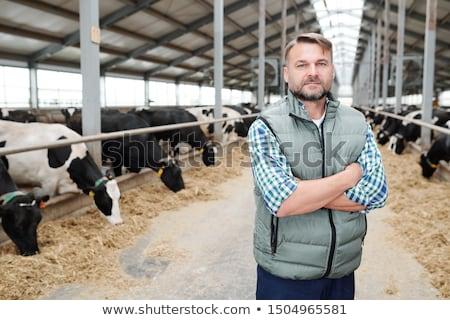 Adam ayakta sığırlar tarım çiftçi ahır Stok fotoğraf © IS2