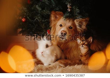 Kedi köpek gece yüz sevmek doktor Stok fotoğraf © Vicasso