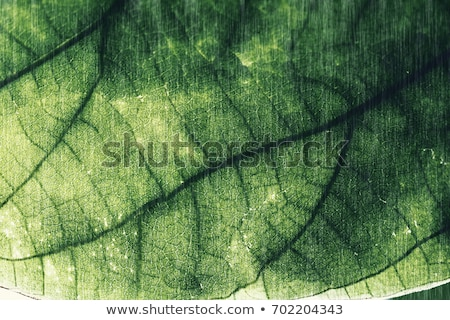 Palm leave background. Flat style. blue tones. Stock photo © alexmillos