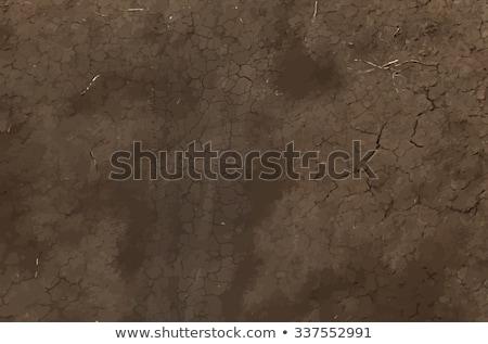 Geknackt trocken Boden Boden Textur Trockenheit Stock foto © stevanovicigor
