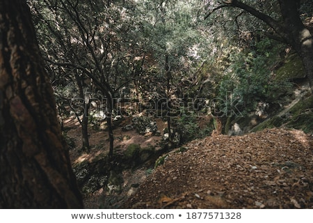 yosun · makro · fotoğraf · yaprak · döken · orman · bahar - stok fotoğraf © thp