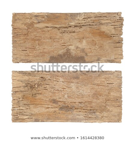 isolated piece of wood decayed by fungus Stock photo © taviphoto