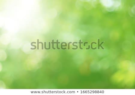 verde · follaje · luz · del · sol · rama · árbol - foto stock © artjazz