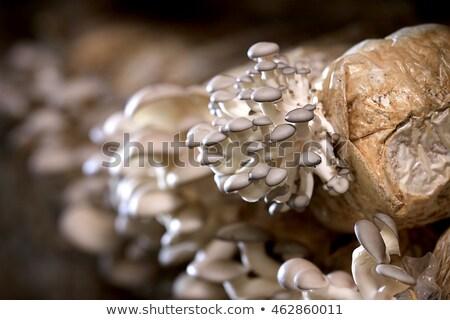 small mushroom grows in wood Stock photo © romvo