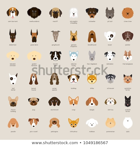 set of dog breeds head stock photo © bluering