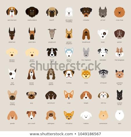 Stock photo: Set of dog breeds head