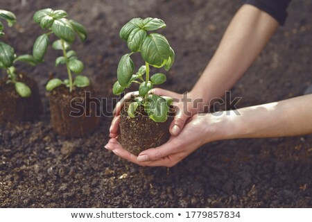 A Girl Holding Natural Fertiliser Stock photo © colematt