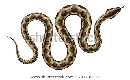 Valósághű piton zöld izolált trópusi kígyó Stock fotó © YuriSchmidt