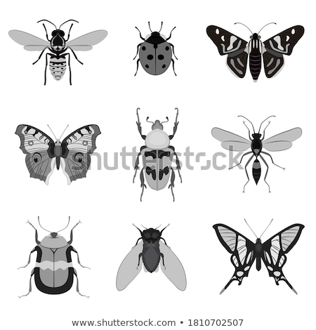 Siluetleri farklı sivrisinek siyah beyaz arka plan Stok fotoğraf © ratkom
