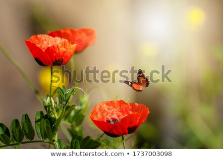 Red fairy flying in flower garden stock photo © colematt