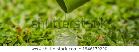 transparent essence from aloe vera plant drips from leaves banner long format stock photo © galitskaya