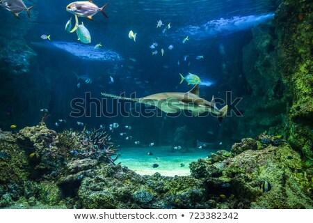 увидела акула иллюстрация Cute рыбы морем Сток-фото © Dazdraperma