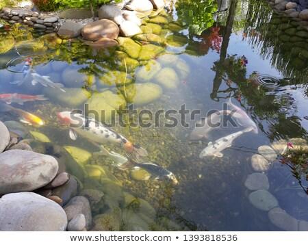 the shark swims in the aquarium view from above stock photo © galitskaya