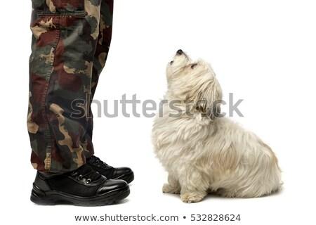 Cute havanese psa właściciel Zdjęcia stock © vauvau