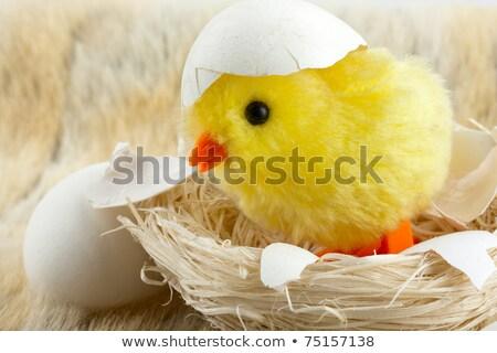 Nido cáscara de huevo grietas juguete pollo recién nacido Foto stock © nomadsoul1