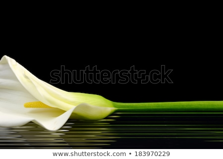 Calla lily flower romantic woman in background Stock photo © CandyboxPhoto
